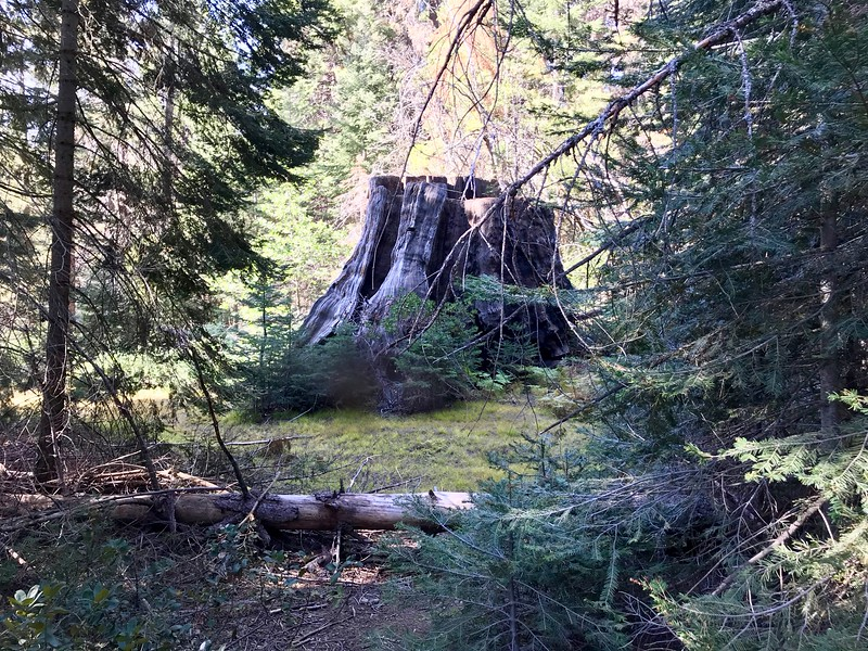 Another Stump