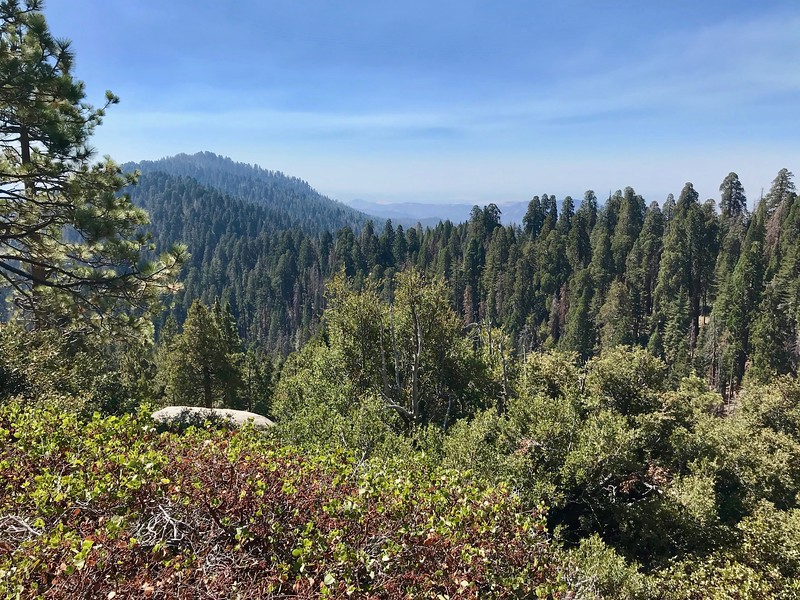 The Redwood Mountain Grove, world's largest sequoia grove