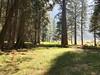 Zumwalt Meadow through the trees