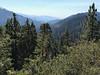 Redwood Mountain Grove
