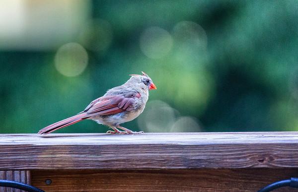 Birds in Rob's garden
