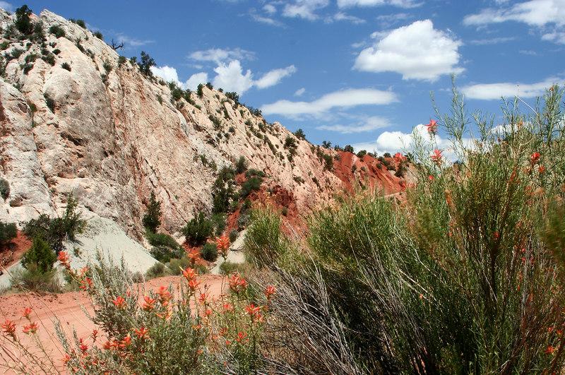 Orange flowers along Route 12, Cottonwood Canyon road, Utah
