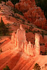 Glowing Hoodoos of Bryce Canyon N.P. at sunrise