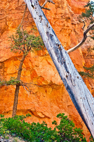 Lone dead tree Bryce Canyon, Utah