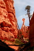 Hoodoos an red rocks along the Navajo Loop Trail, Bryce Canyon N.P., Utah