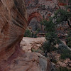 Canyon Overlook Trail over the slickrock.