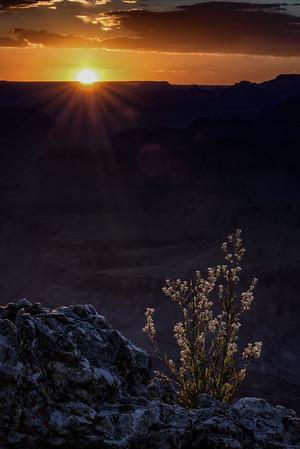 Artsy sunset shot, from Moran Point
