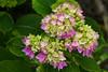 Flowers, Saint-Pastour, Lot-et-Garonne, Aquitaine, southwest France