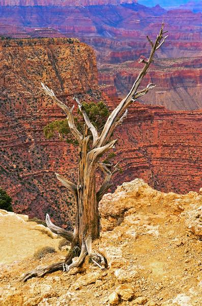 Grand Canyon 263 - Version 2 - Version 2