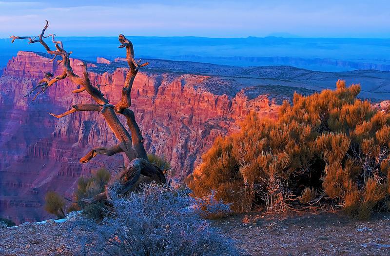 Grand Canyon 559 - Version 2 - Version 2