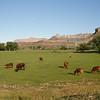 Pasture near Grafton ghost town, UT.