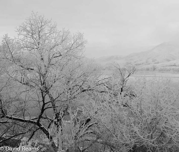 Frozen Tree, Idaho