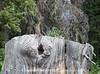 Camp Fauna_08282019_011