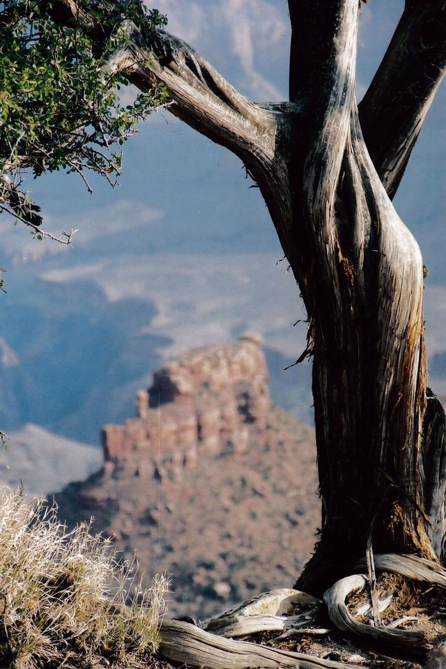 GRAND CANYON , ARIZONA: Love those trees.