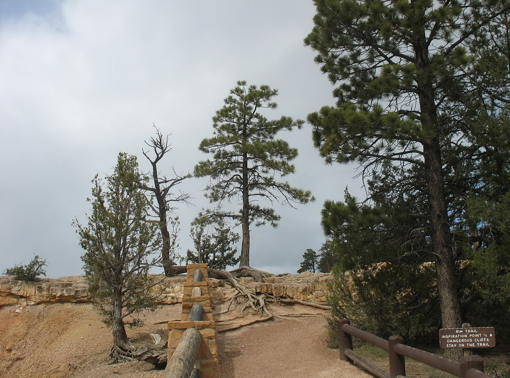 """We walked the sometimes challenging rim trail. I was constantly amazed at how some of the trees managed to survive. This is close to Inspiration Point. Notice the sign says """"Dangerous cliffs. Stay on the trail."""""""