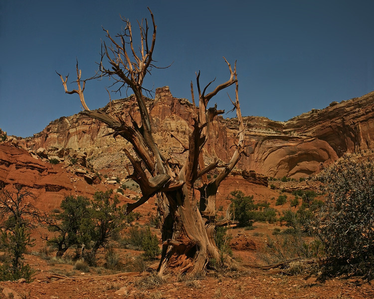 Utah - Capitol Reef National Park
