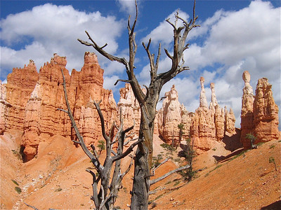 Peekaboo Loop, Bryce National Park, Utah, Southwest USA.
