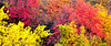 A Slice of Zion Autumn