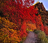 Many Colors of Zion