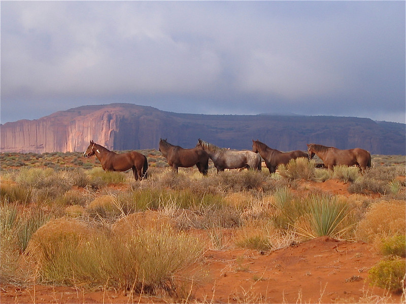 Desert Horses in the morning sun. Monument Valley Navajo Tribal Park, Utah, USA.
