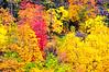 Autumn Colors in Zion