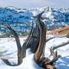 Snag in the snow, Canyonlands National Park.