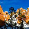 Trees and hoodoos, Bryce Canyon National Park.