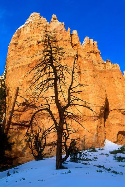 Lone snag, Bryce Canyon National Park.