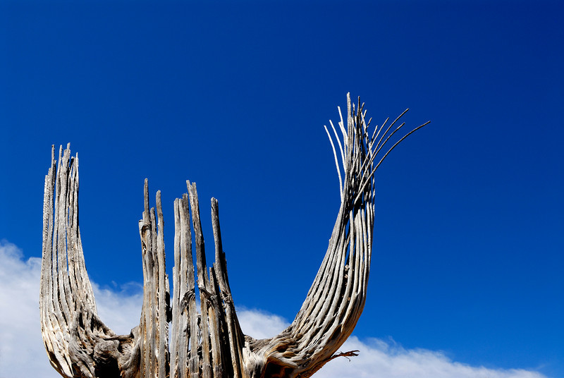 Saguaro cactus skeleton still standing tall against the sky.