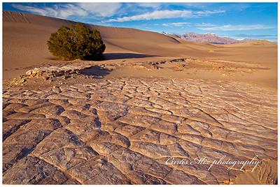 Mud cracks.
