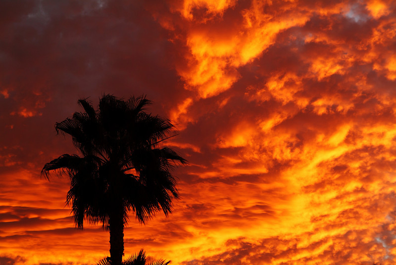 Palm tree and fire red sunset clouds on an Arizona evening in Green Valley.