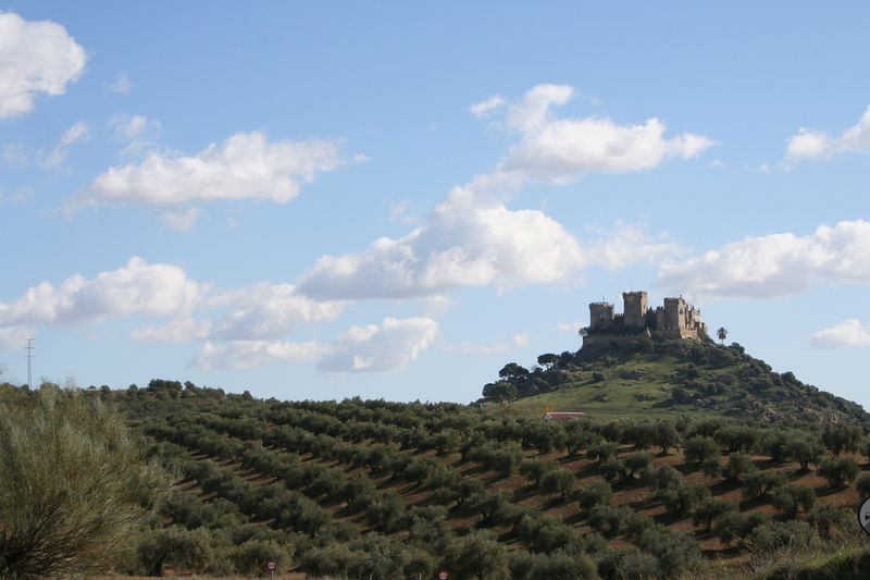 Driving to Cordoba, this castle rose out of nowhere, and we watched it grow on the horizon. How could we not stop? Turns out it's one of the best preserved castles in Spain.