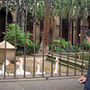 Barcelona Cathedral geese