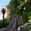 In the garden of the Alkazar.