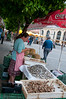On our way down to Tarifa, we stopped for lunch and a stretch in Jerez.  In our walks about the market area, there was this lady selling snails.  Large ones in that front tray, and small ones in the bags in front of her.  I wish we had time for a better shot.  I don't think any of the group had snails for lunch.