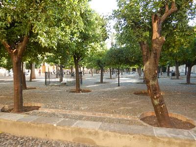 Orange Tree Courtyard