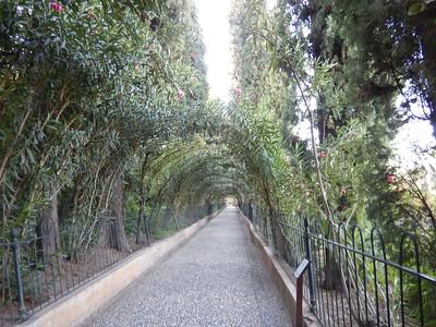 oleander archway