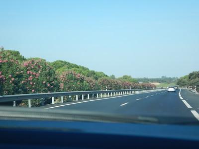 oleander divider