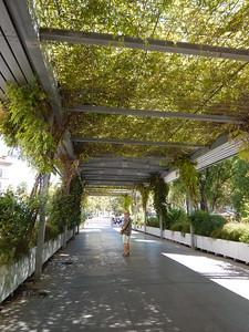 vine covered metro