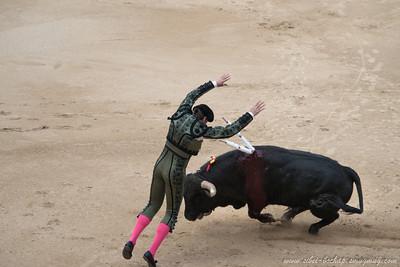 stabbing bull