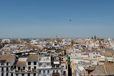 city of seville as seen from the cathedral tower