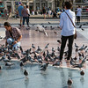 Pigeons Gather in Catalunya Square, Barcelona, Spain