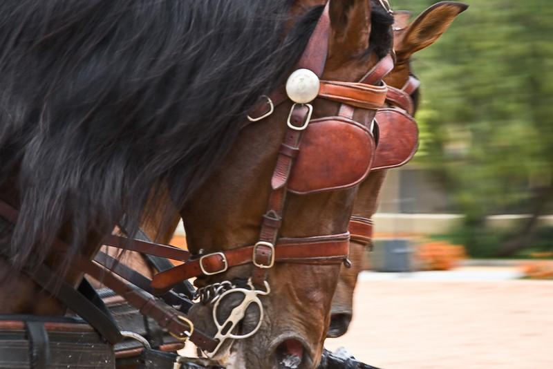 Practice run at Royal Andalusian School of Equestrian Art.