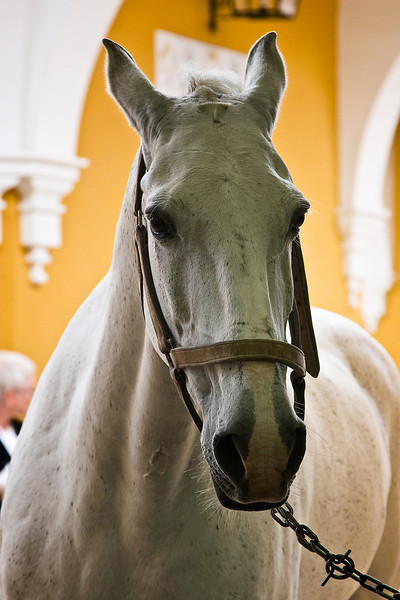 Royal Andalusian School of Equestrian Art in the town of Jerez