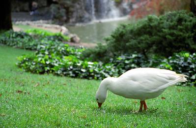 Tranquility in El Parque del Retiro, Madrid