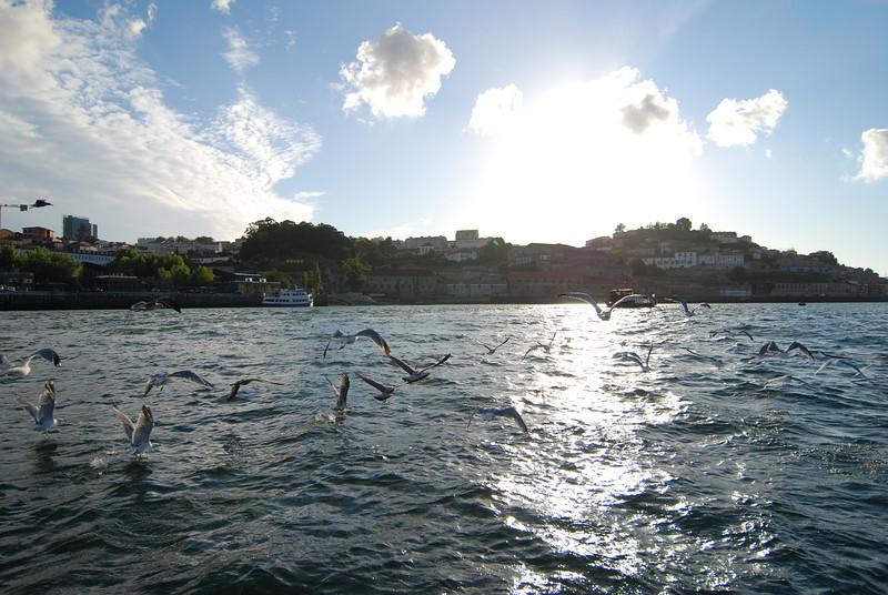 River in Porto