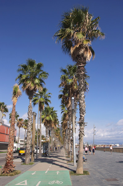 Palm trees along Passeig Maritim by Barcelona beach