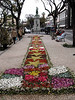 Flowers at Funchal Madeira for the Spring flower festival