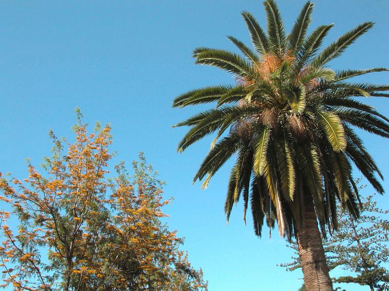 Palm Tree Funchal Madeira