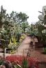 Cactii at Botanical Gardens Funchal Madeira